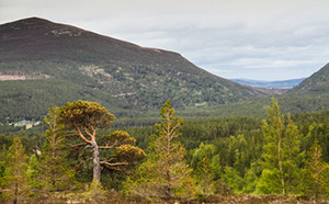 Cairngorms Nature