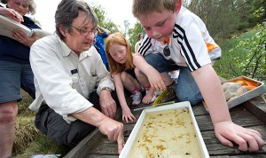 children inspecting findings from a pond dipping event