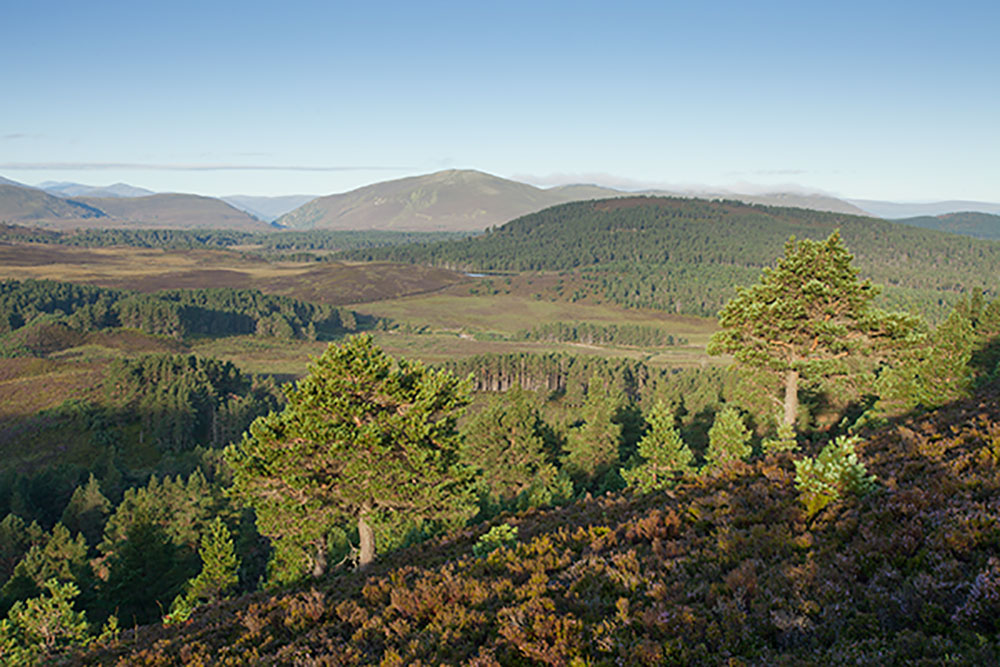 pine-trees-and-moorland