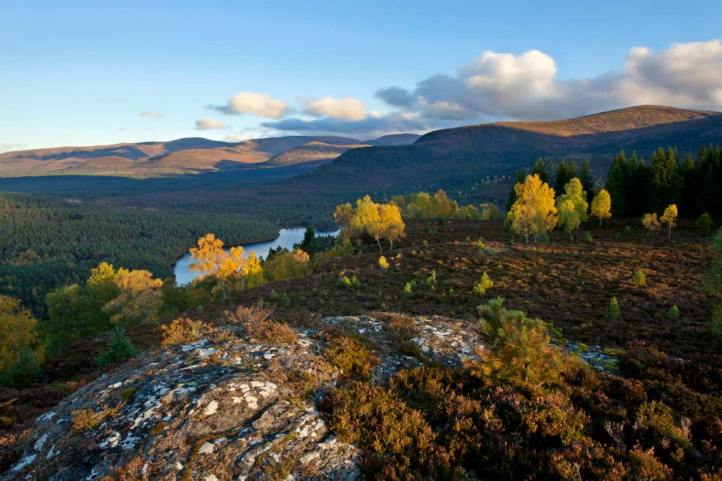 Scattered birch and pine woodland in autumn