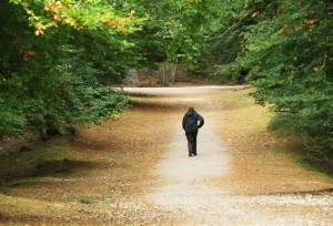 3. Woodland walk
