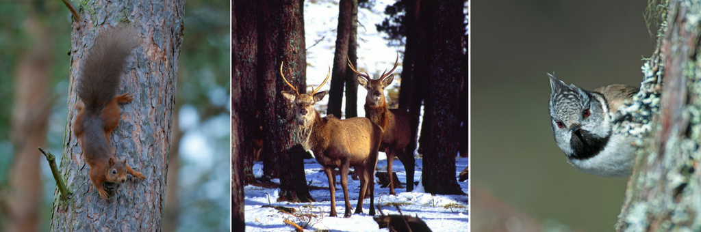 Wildlife in the forests