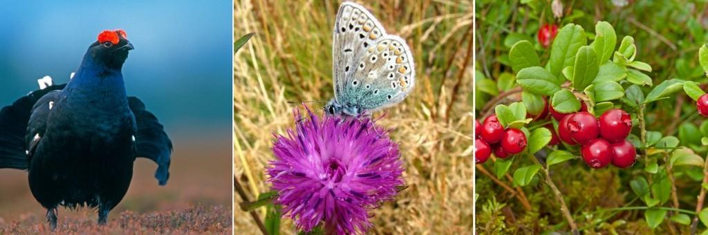 Wildlife on the Moorlands