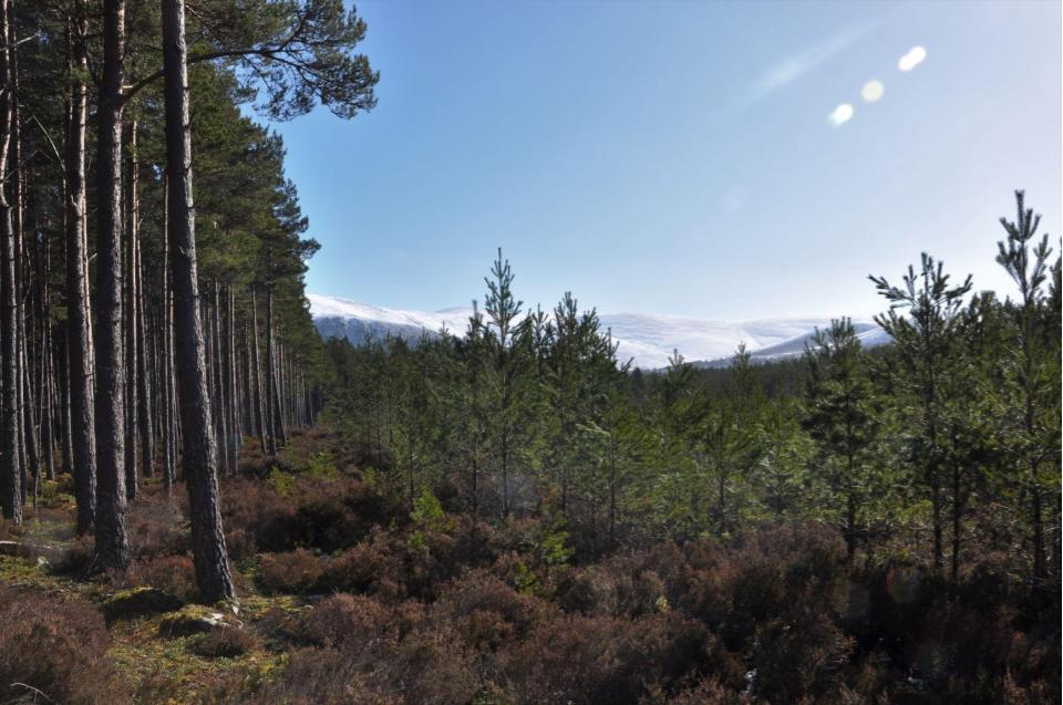 View of the Cairngorms from the Speyside Way