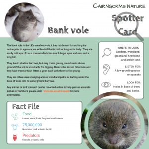 Bank Vole Spotter Card