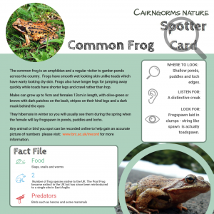 Wildlife Spotter Common Frog